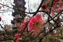 春天的花蕊