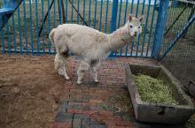 羊驼过的逍遥自在