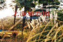 上海植物园|快来一起赏花吧