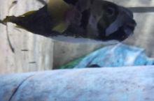 三亚欢乐水族馆里有很多海洋动物