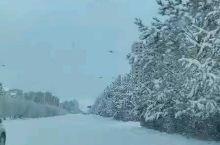 来锡林看雪