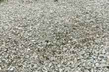 大连海边的一处小景色!比常见的沙石子大