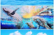 最难忘的记忆——黄金海岸观鲸