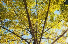秋天的约定~帽子峰林场