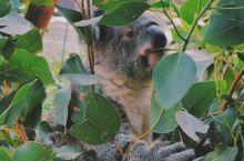 顶级动物园远瞰悉尼城景