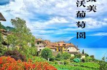 致美的瑞士拉沃葡萄园和日内瓦湖