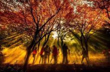 秋天的庐山   别样风景