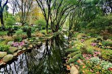 共青森林公园~菊花展