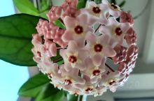 一年中又到了赏花季!如果是自己亲手养护的,欣赏起来就像亲手呵护的孩子样,更是喜爱有加!