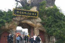 大槐树(非物质文化遗产)