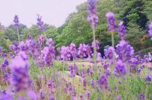 在大阪陪你宅家日记1.1∣夏天再去香草园