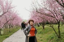 """扬州1 瘦西湖32 瘦西湖在清代康乾时期已形成基本格局,有""""园林之盛,甲于天下""""之誉。瘦西湖主要分为"""