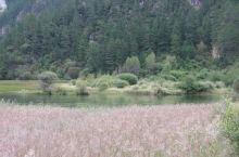 芦苇海,是九寨沟景区内一个半沼泽湖泊,海拔2140米,全长2.2公里。 海中芦苇丛生,水鸟飞翔。我在