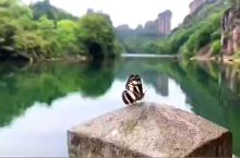 景色宜人,蝴蝶自来