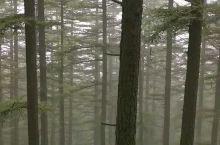 雨后的太行山森林