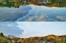 秋林爱晚,共青森林公园赏秋。