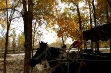 胡杨大道____进入达瓦昆沙漠的胡杨路