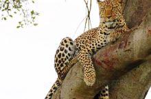 路小露的旅行~探秘肯尼亚动物世界