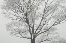 藏匿在大山里烟雨濛濛的春雪