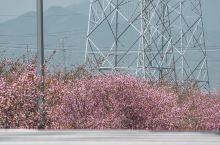 杭州赏花|莫干山路边偶遇小众赏花地