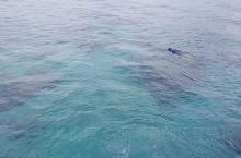 蓝梦岛海水清澈无污染,水下生物放眼望去,清晰可见,岛上椰树茂盛,居民生活安详和乐。岛上可游玩地包括潜