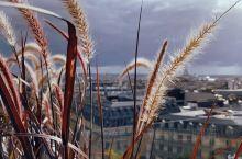 这个冬季、狗尾巴草和巴黎铁塔