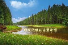 黄海国家森林公园