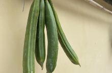 新鲜的大巴豆