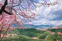 上过《中国国家地理》的樱花园