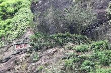 武夷山庄之正岩行径