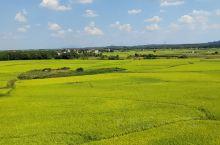 高铁外的稻田