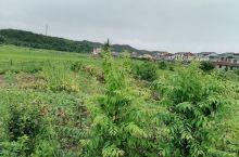 美丽的乡村,在绿意盎然的田间,真是美丽,舒服,向往田间生活。