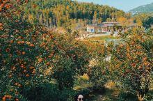 南北湖|杭州周边又一秋天玩耍的天堂地