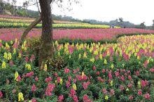 青秀山的春天花儿朵朵开