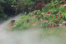 想和小熊猫近距离接触就来都江堰的熊猫谷吧
