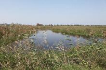 洪泽湖湿地占地面积35万亩,是江苏省最大的淡水湿地自然保护区,在全国湿地中排第11位,华东第四位。江