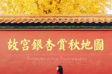 旅行 | 故宫银杏红叶赏秋地图