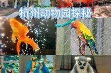 杭州动物园探秘之旅