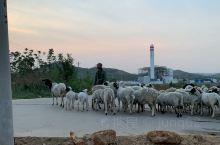 山里的牧羊人!
