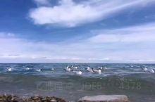 青海湖随拍