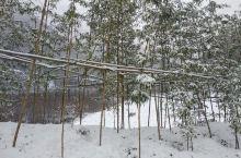 今天适合去阳坡院子看雪景