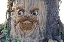 老槐树,会说话,会答题,但是得等,我没耐心,看看走了。