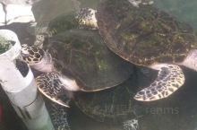 硇洲岛乌龟城值得一游的地方