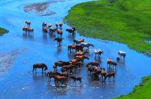 大草原绝美