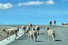 倔犟的山羊🐐