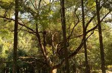 武夷山庄的院子