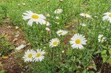 户外小野花