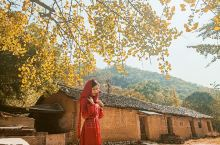 桂林海洋乡银杏半日游