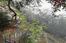 莽山五指峰景区,山高林密,险峰奇松,云雾缭绕,心旷神怡。