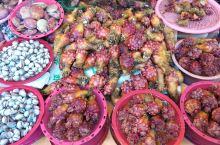 一个真正的鱼市場,座落於韓国釜山之港湾区內,其售賣之海鲜產品,林林種種,多不勝数,全都渔民当日之渔獲